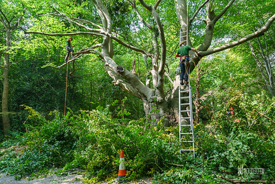 22 Conservation Arborists at High Beach (c) Marion Sidebottom