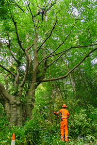 14 Conservation Arborists at High Beach (c) Marion Sidebottom