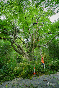 16 Conservation Arborists at High Beach (c) Marion Sidebottom