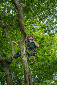 21 Conservation Arborists Pole Hill (c) Marion Sidebottom