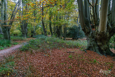 12 FSC Woodland Ecology (c) Marion Sidebottom