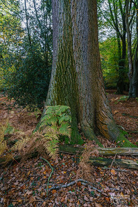 21 FSC Woodland Ecology (c) Marion Sidebottom