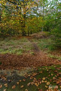 14 FSC Woodland Ecology (c) Marion Sidebottom