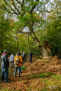 08 FSC Woodland Ecology (c) Marion Sidebottom