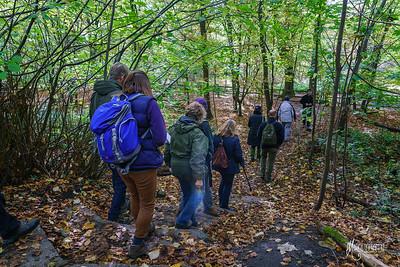 03 FSC Woodland Ecology (c) Marion Sidebottom