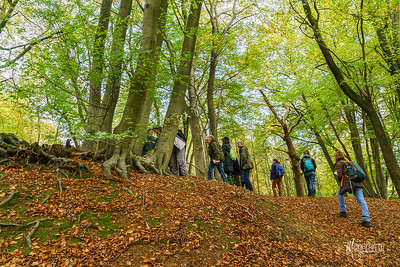 26 FSC Woodland Ecology (c) Marion Sidebottom
