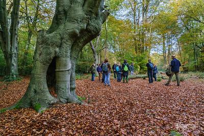 18 FSC Woodland Ecology (c) Marion Sidebottom