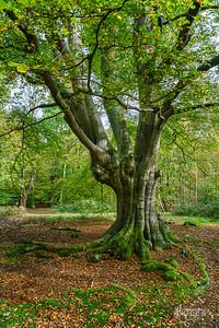 07 FSC Woodland Ecology (c) Marion Sidebottom