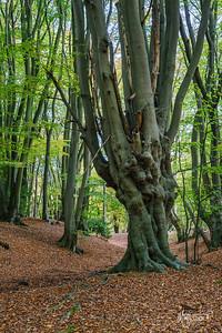 25 FSC Woodland Ecology (c) Marion Sidebottom