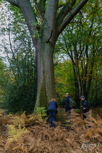 22 FSC Woodland Ecology (c) Marion Sidebottom