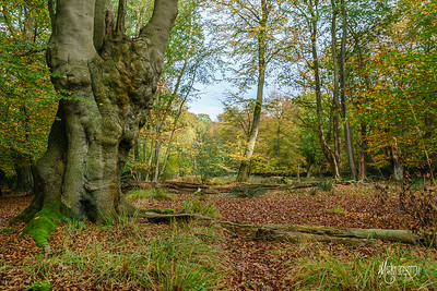 19 FSC Woodland Ecology (c) Marion Sidebottom