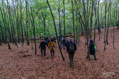 10 FSC Woodland Ecology (c) Marion Sidebottom