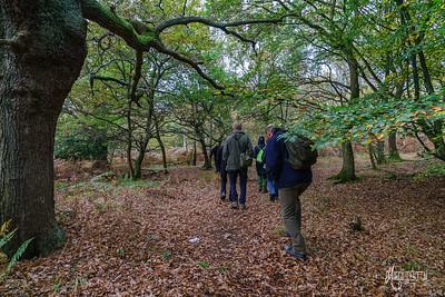 16 FSC Woodland Ecology (c) Marion Sidebottom