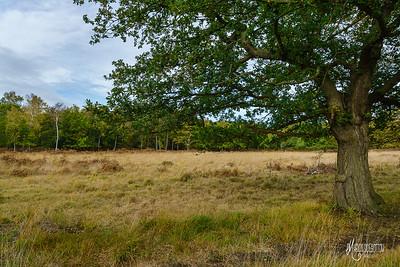 17 FSC Woodland Ecology (c) Marion Sidebottom