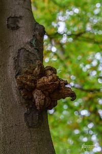 23 FSC Woodland Ecology (c) Marion Sidebottom