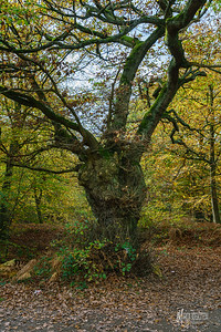 13 FSC Woodland Ecology (c) Marion Sidebottom