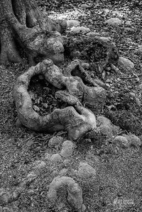 BW17 Moss & Roots 2 in Epping Forest