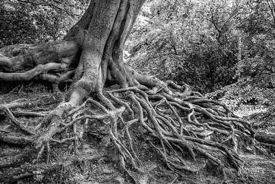 BW25 Exposed Roots at Knighton Lake