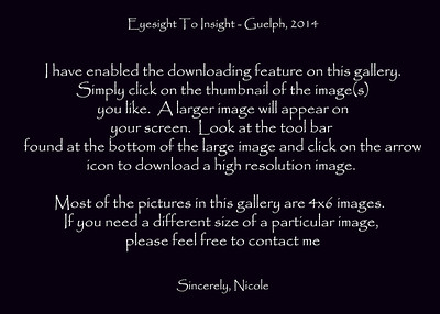 eyesight to insight gallery