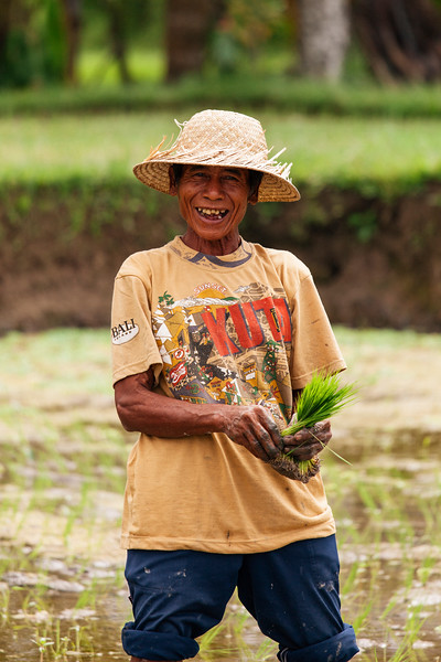 The Rice Farmer, Bali