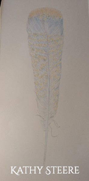 feather 31
