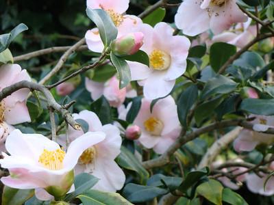 Flowers - pinkypurple