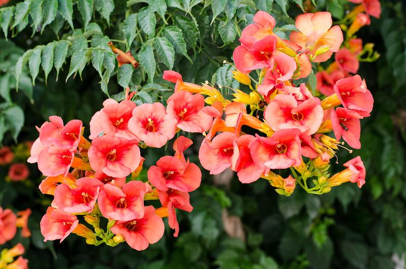 Flower #8