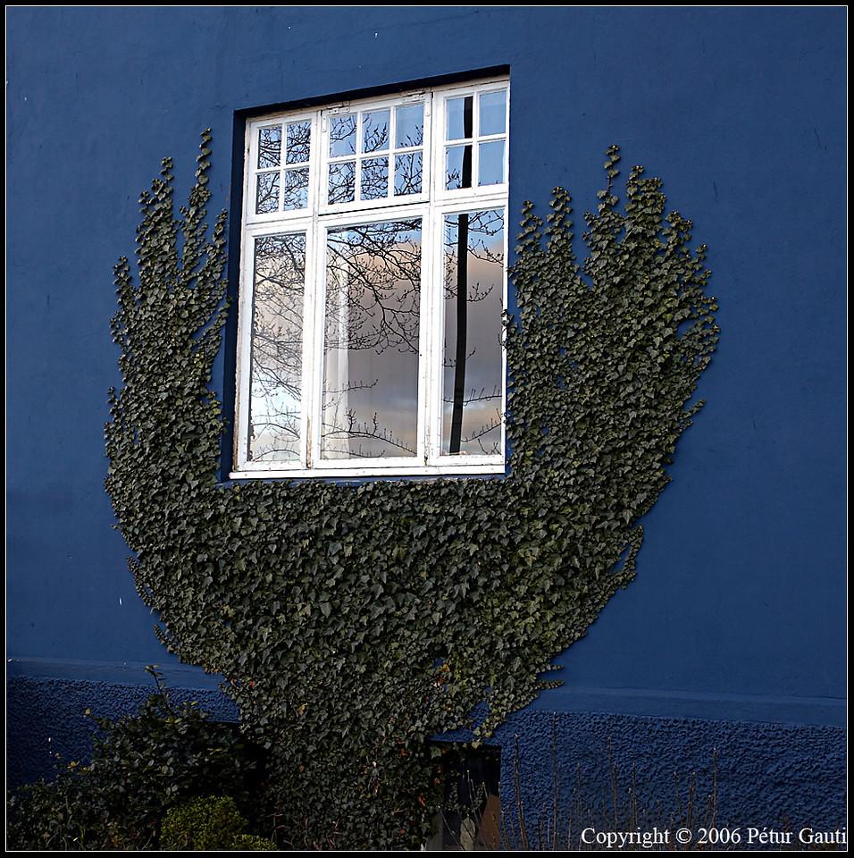 Window in green hands
