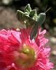 Poser on Flower
