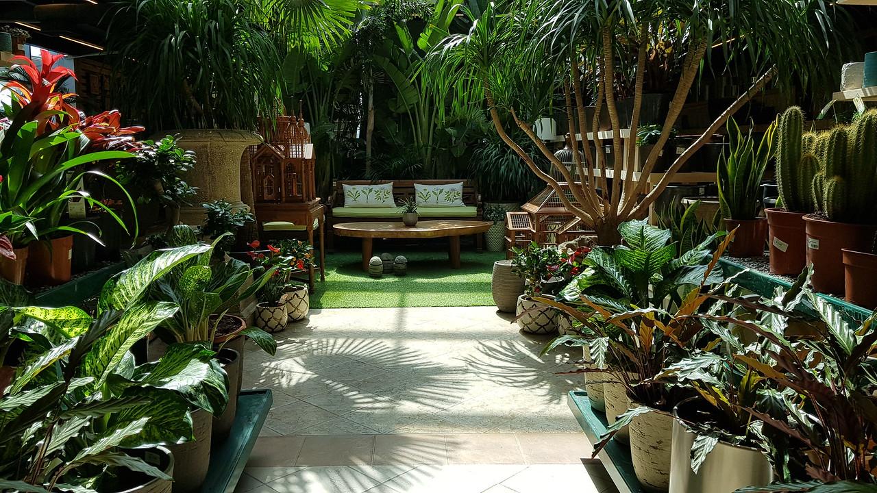 Indoor Garden - Dark Green scheme