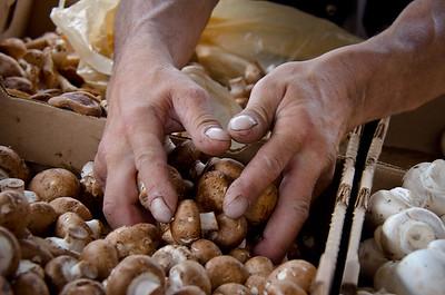 Mushroom Monger
