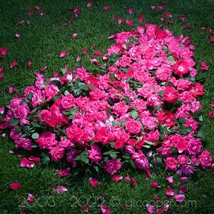 Rose Heart II