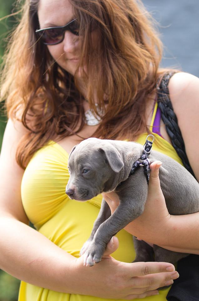 puppy's first visit
