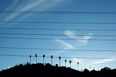 Power lines and palm trees on top of the hill next to the confluence.