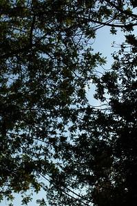 DebsPark041-TreesAbove-2006-10-06.jpg