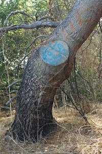 DebsPark044-GraffittiedTree-2006-10-06.jpg