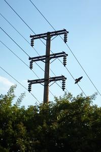 DebsPark030-TelephoneWiresAndHawk-2006-10-06.jpg