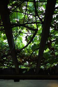 AvilaAdobe011-LeavesOverhead-2006-11-13.jpg