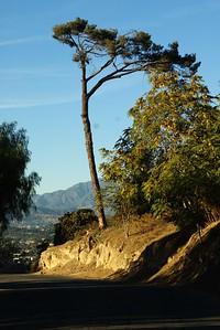 ElysianPark016-TreeOnParkRowDr-2006-10-18.jpg