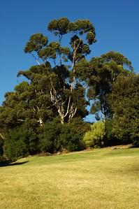 ElysianPark004-TreesOnTopOfHillSouthSide-2006-10-18.jpg