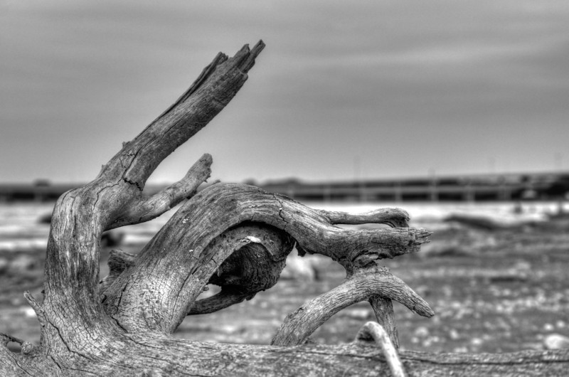 Driftwood, Lake Ray Hubbard, Garland TX (Aug 2013, HDR)