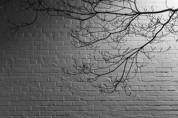 Branches and a White Brick Wall