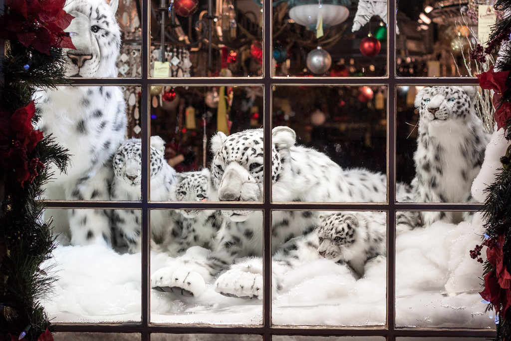 Snow Leopards in Very Festive Shop