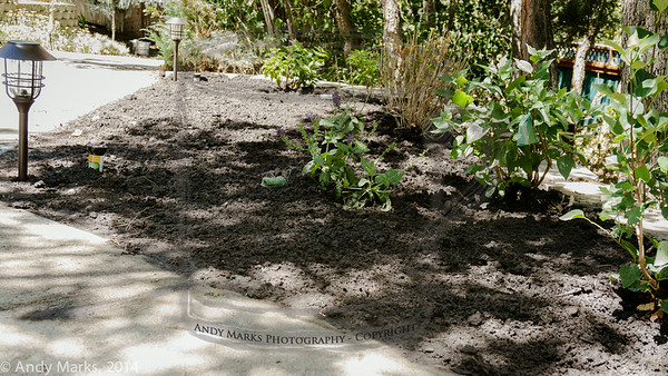 Plenty of room for a great flower bed. Solar lights mark the new pop-up sprinklers
