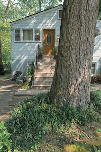 house and tree trunk