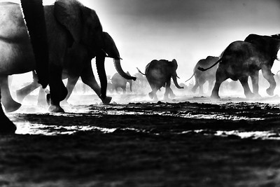 Hwange_Elephant_Drought-8