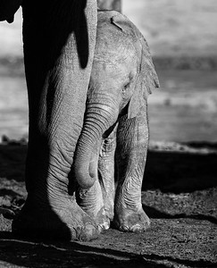 Hwange_Elephant_Drought-6