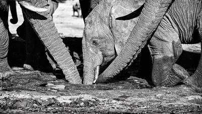 Hwange_Elephant_Drought-3