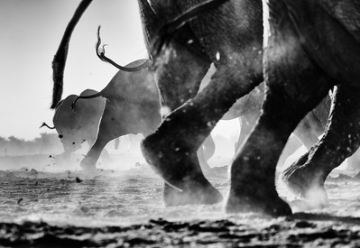 Hwange_Elephant_Drought-9