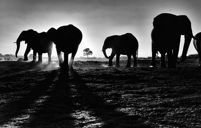 Hwange_Elephant_Drought-1